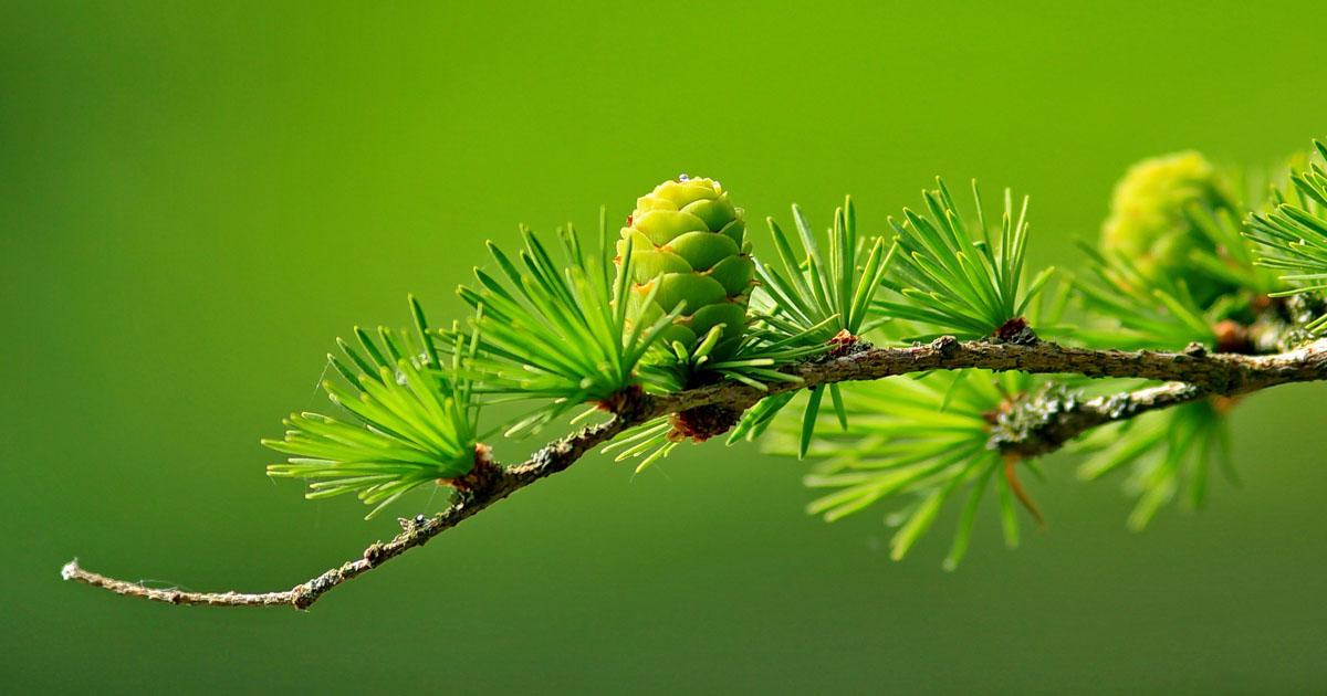 Celebre o Dia da Terra da melhor forma... a mais natural!