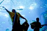 Fado Miudinho: Concerto de Fado para crianças no Oceanário